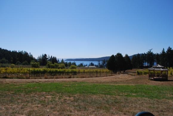 Saturna Winery