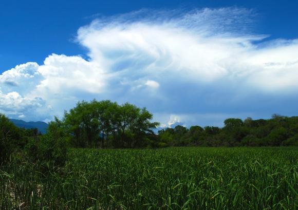 Northern argentina field