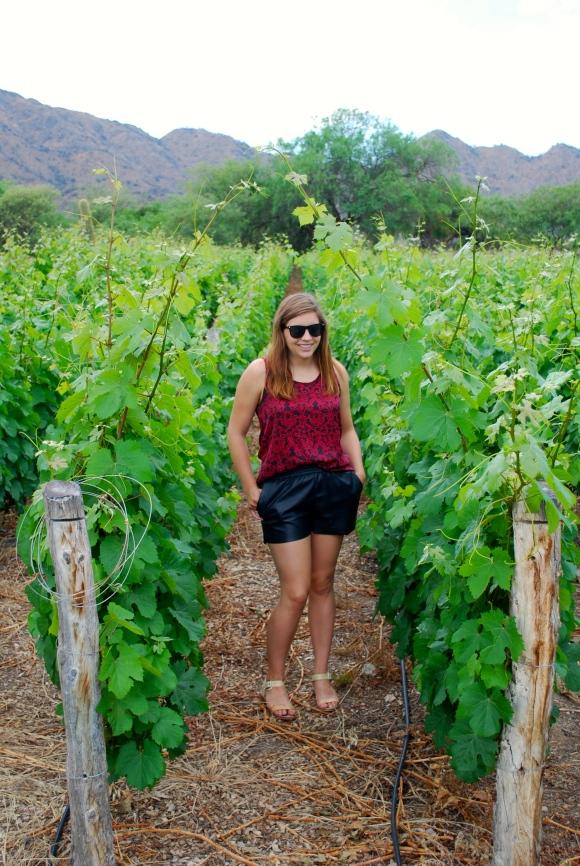 Vineyards at Domingo Molina