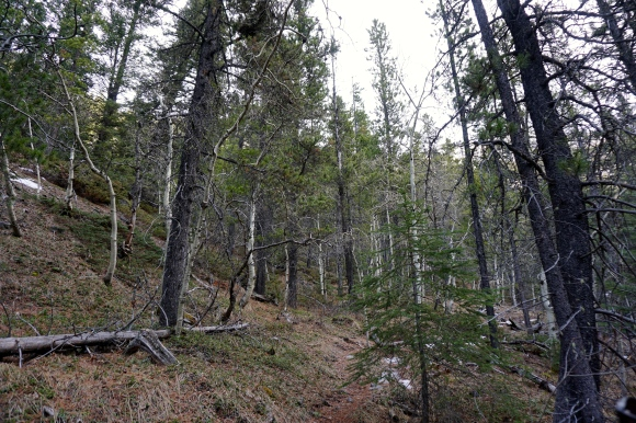 Baldy Pass - Trees