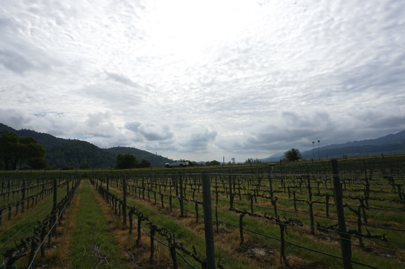 Dutch Henry Winery