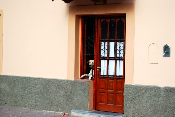 Puppy in the window Cafayate